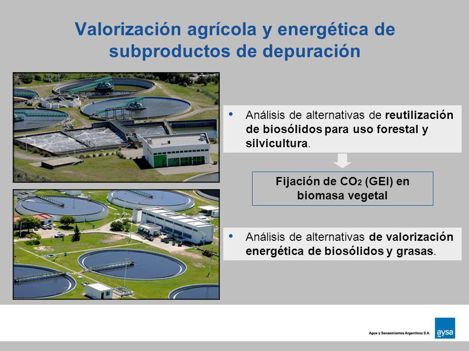Valorización agrícola y energética de subproductos de depuración