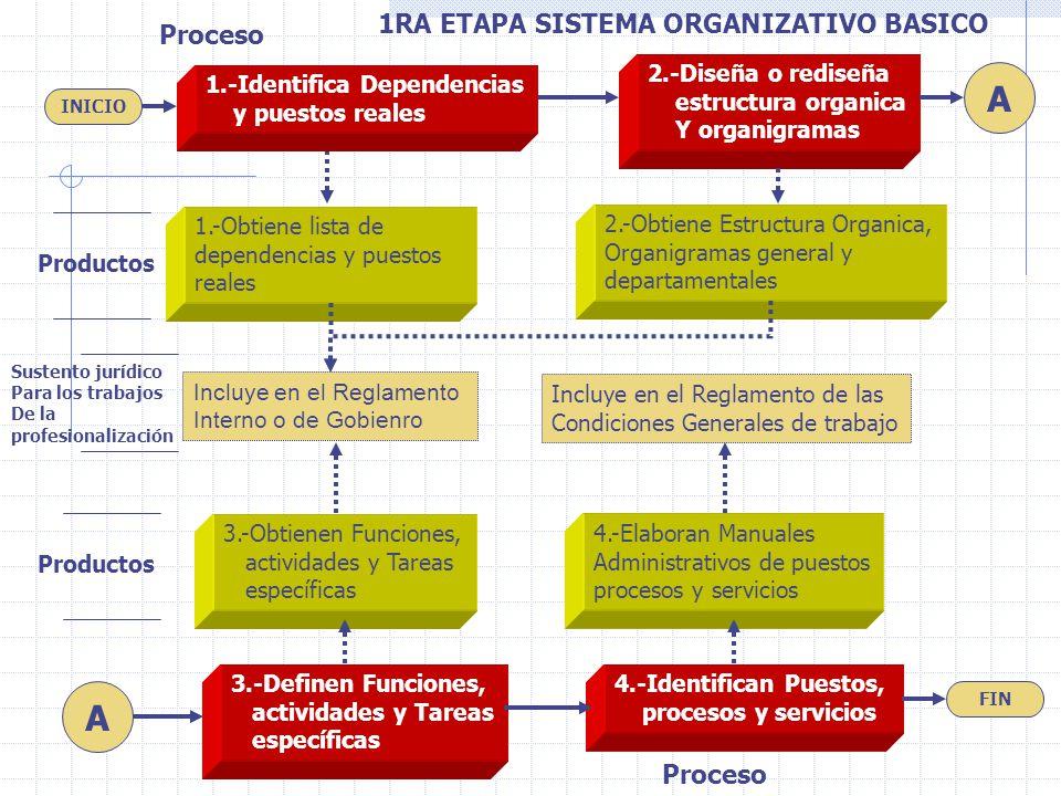1RA ETAPA SISTEMA ORGANIZATIVO BASICO