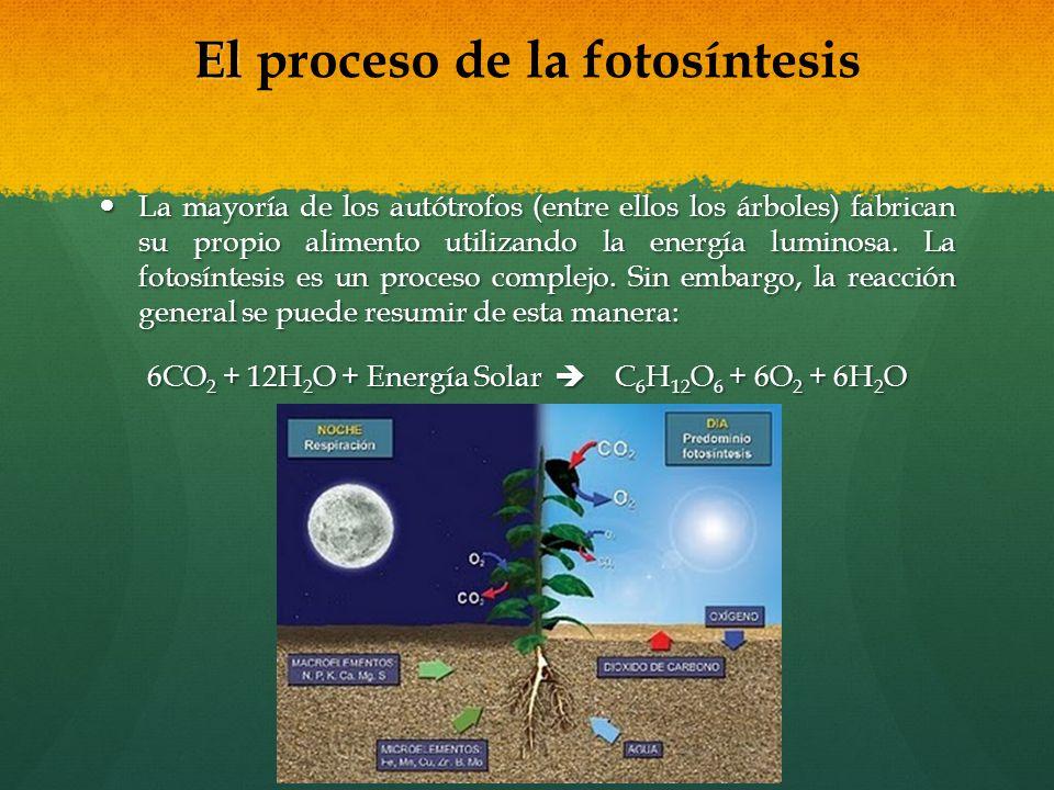 El proceso de la fotosíntesis