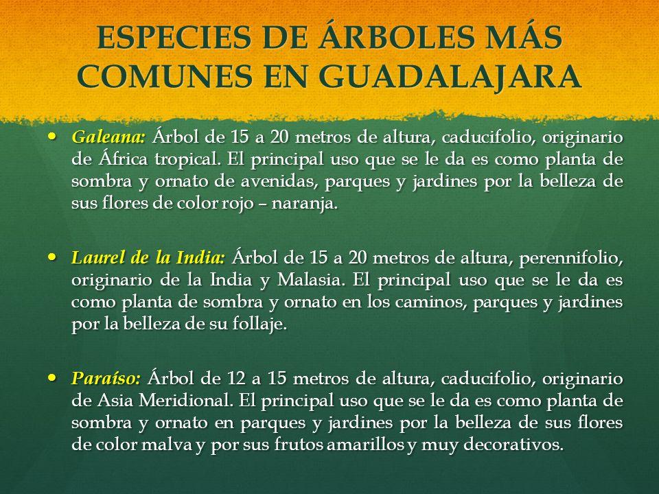 ESPECIES DE ÁRBOLES MÁS COMUNES EN GUADALAJARA