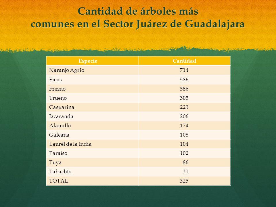 Cantidad de árboles más comunes en el Sector Juárez de Guadalajara