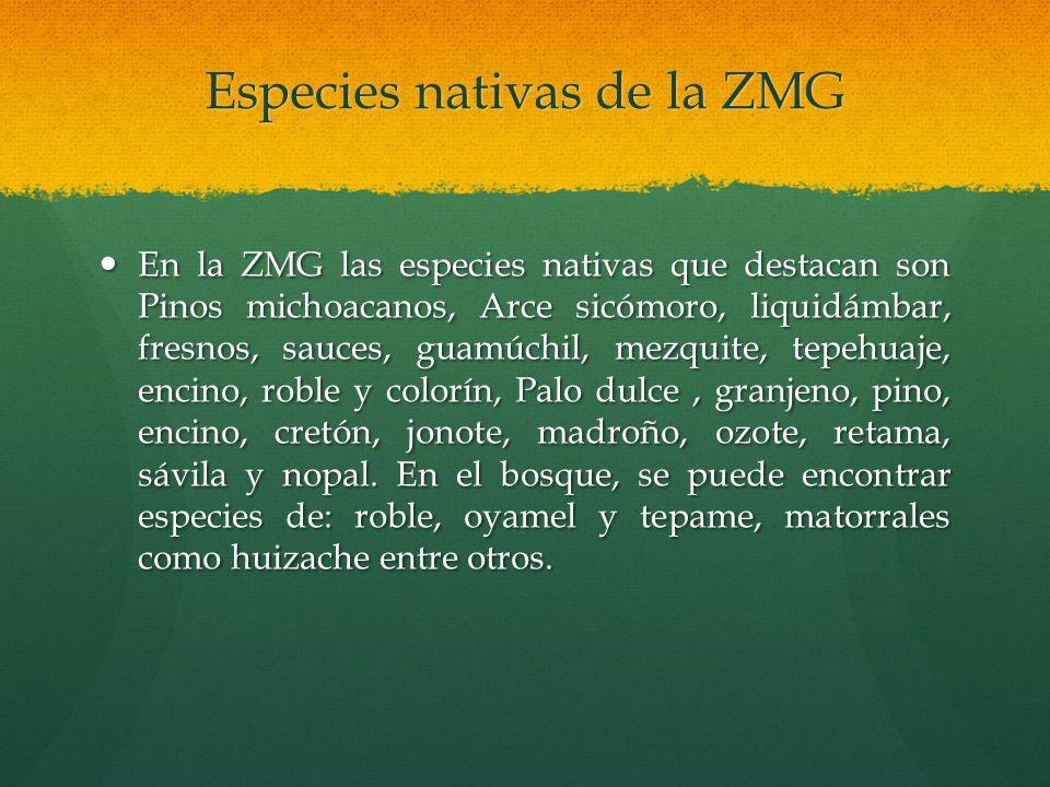 Especies nativas de la ZMG