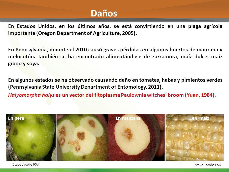 Daños En Estados Unidos, en los últimos años, se está convirtiendo en una plaga agrícola importante (Oregon Department of Agriculture, 2005).