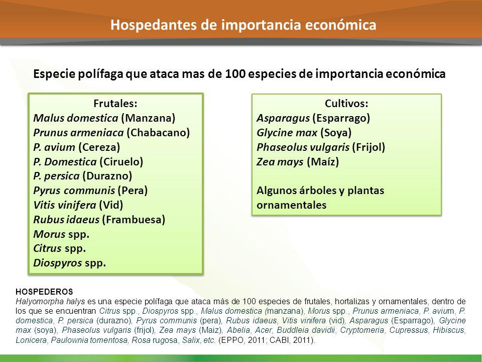 Hospedantes de importancia económica