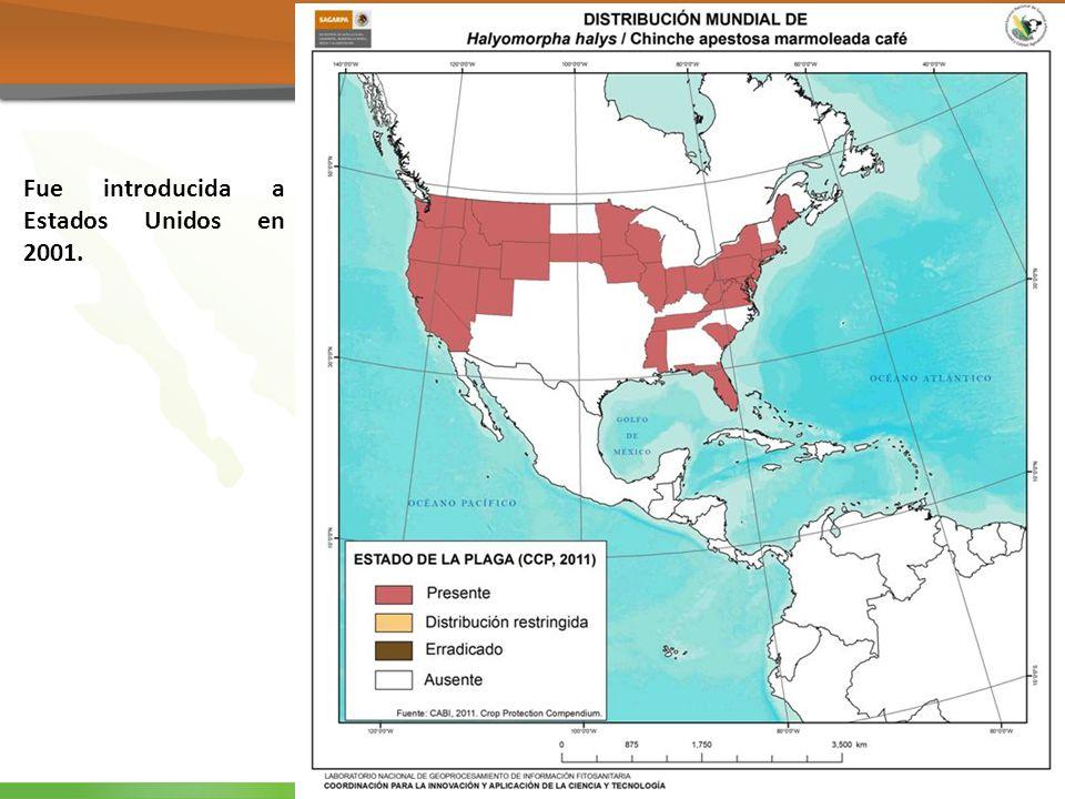 Norte América Fue introducida a Estados Unidos en 2001.