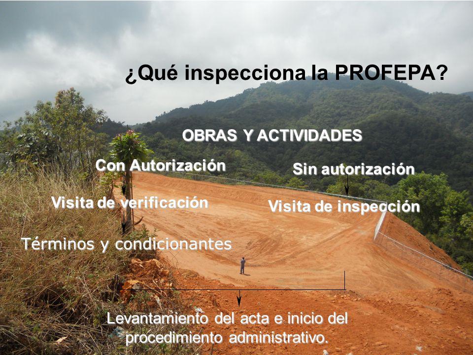 ¿Qué inspecciona la PROFEPA