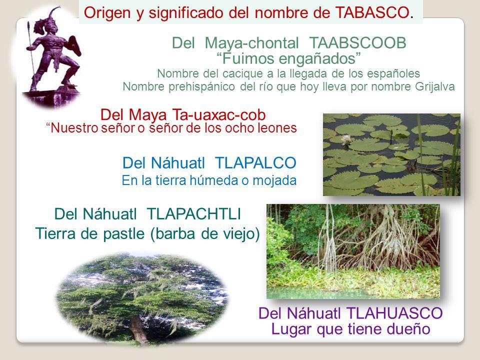 Del Maya-chontal TAABSCOOB Fuimos engañados