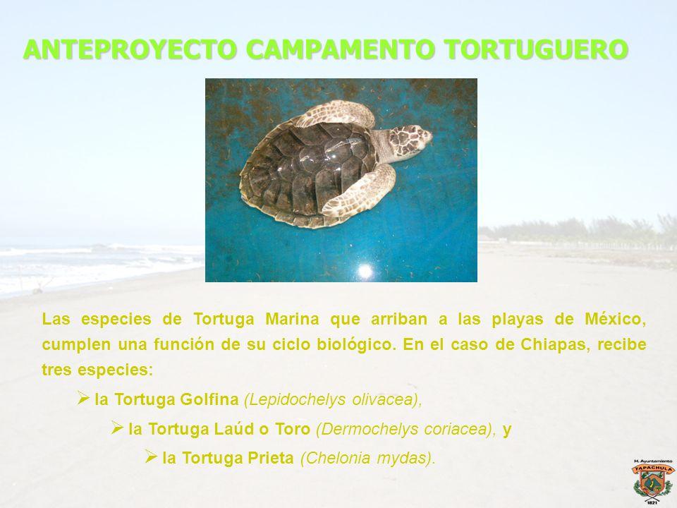 ANTEPROYECTO CAMPAMENTO TORTUGUERO