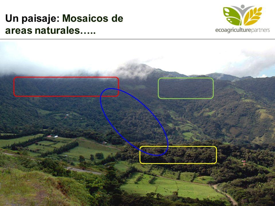 Un paisaje: Mosaicos de areas naturales…..