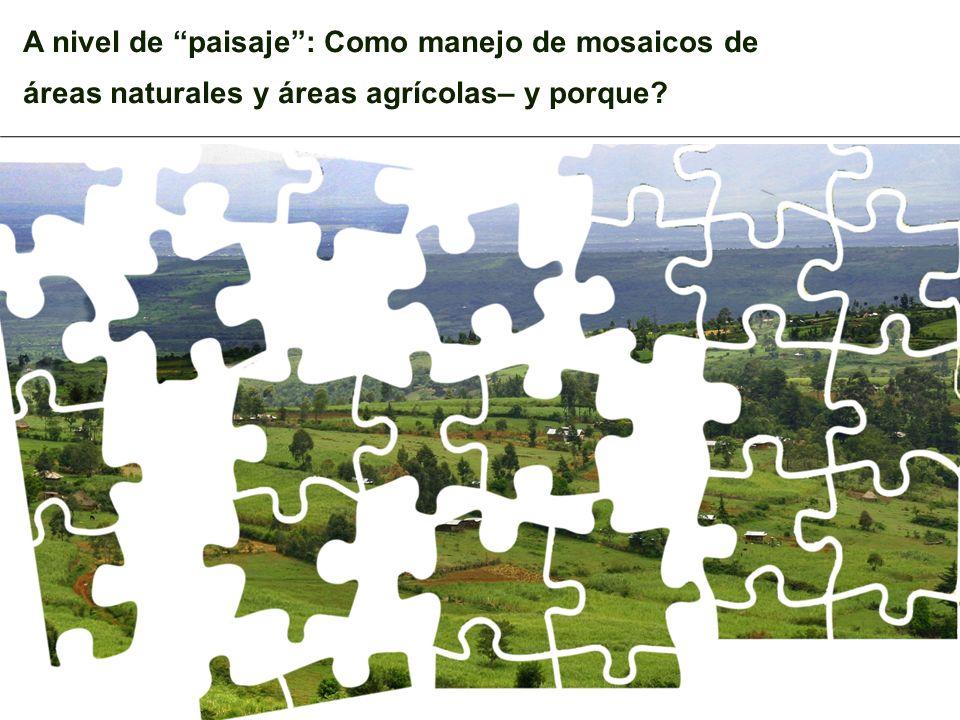 A nivel de paisaje : Como manejo de mosaicos de