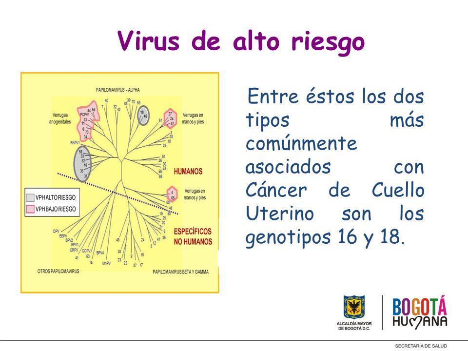 Virus de alto riesgoEntre éstos los dos tipos más comúnmente asociados con Cáncer de Cuello Uterino son los genotipos 16 y 18.
