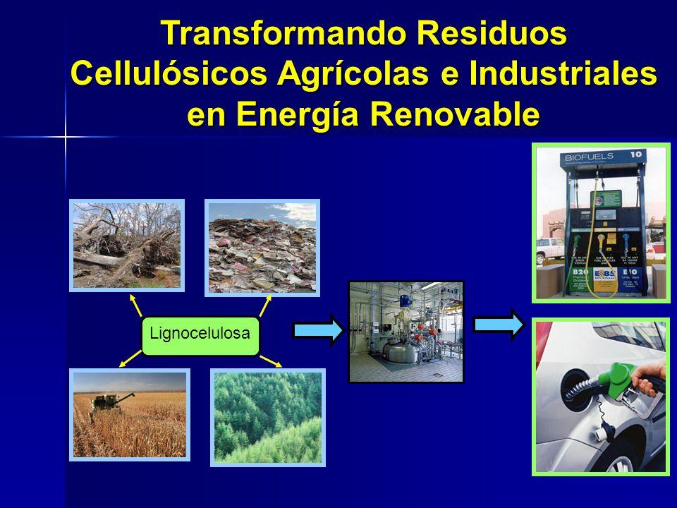 Transformando Residuos Cellulósicos Agrícolas e Industriales en Energía Renovable