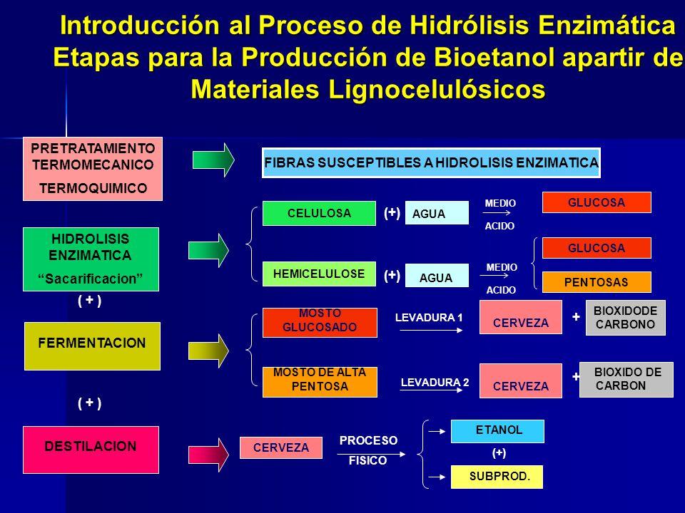 Introducción al Proceso de Hidrólisis Enzimática