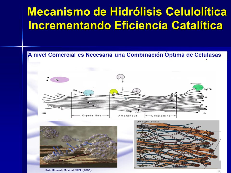 Mecanismo de Hidrólisis Celulolítica