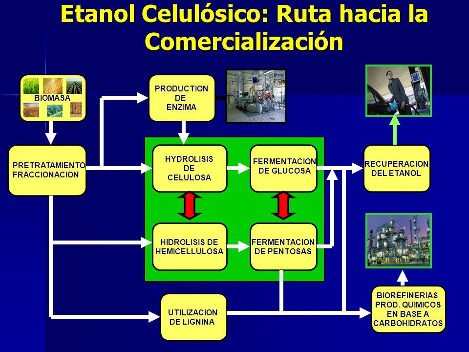 Etanol Celulósico: Ruta hacia la Comercialización