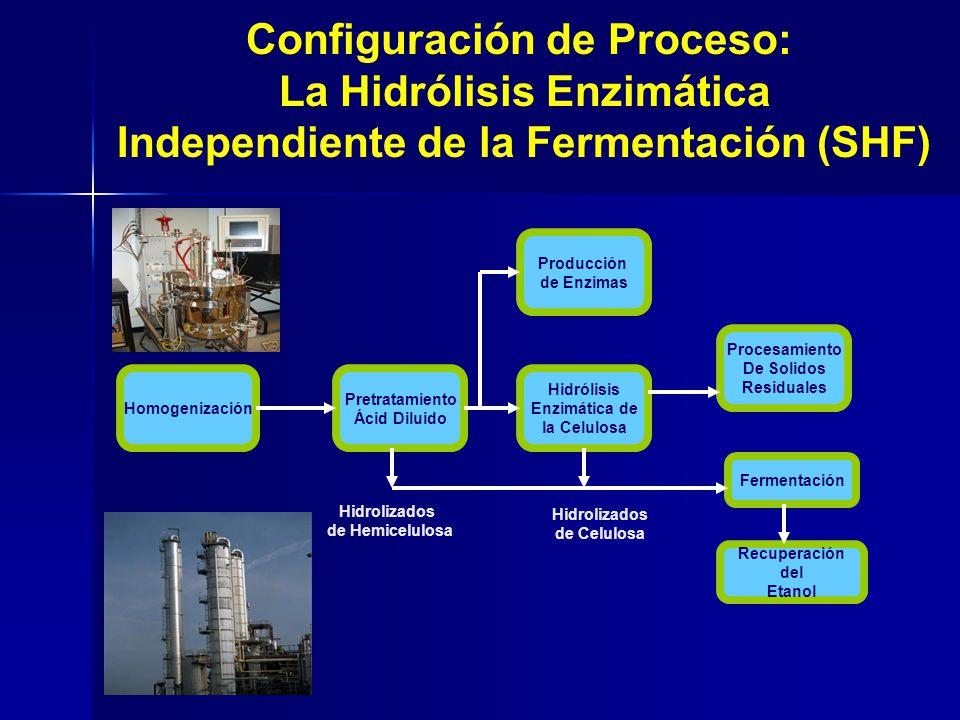 Configuración de Proceso: La Hidrólisis Enzimática