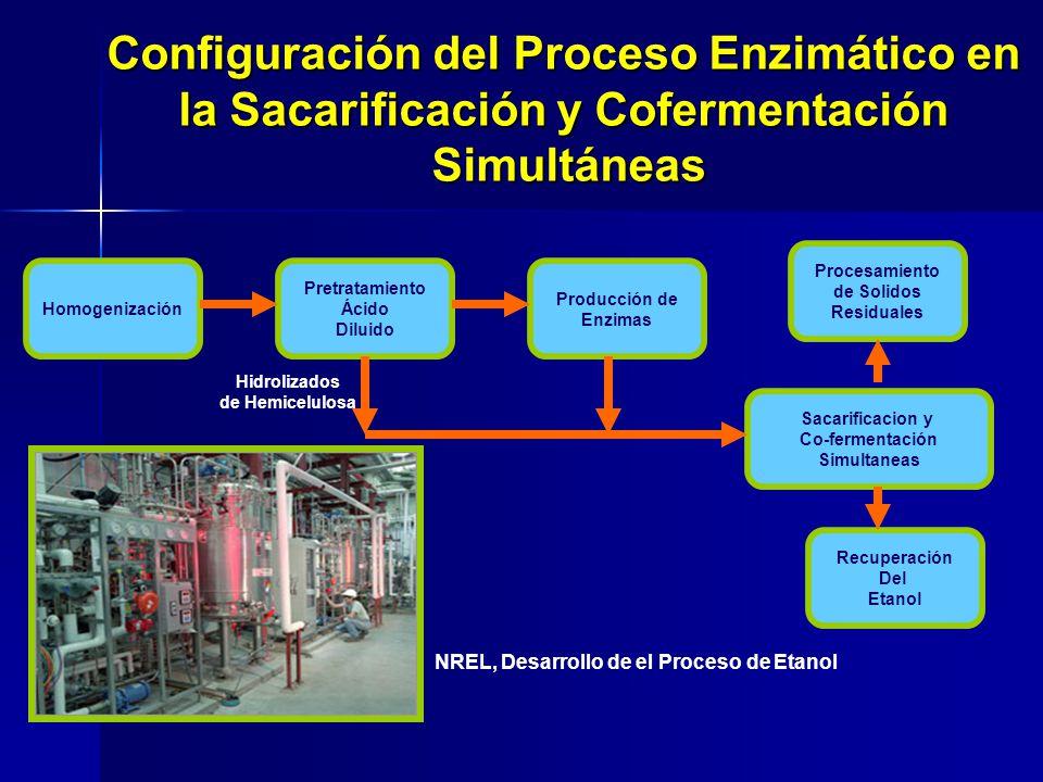 Configuración del Proceso Enzimático en