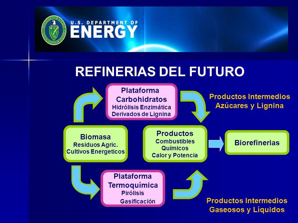 Hidrólisis Enzimática Productos Intermedios Productos Intermedios