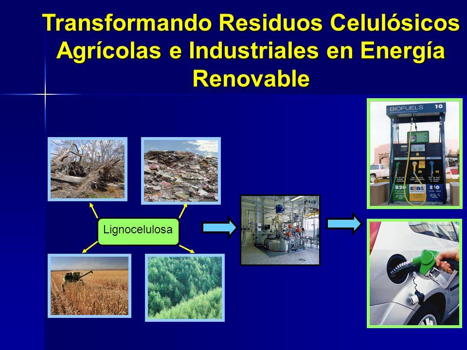Transformando Residuos Celulósicos Agrícolas e Industriales en Energía Renovable
