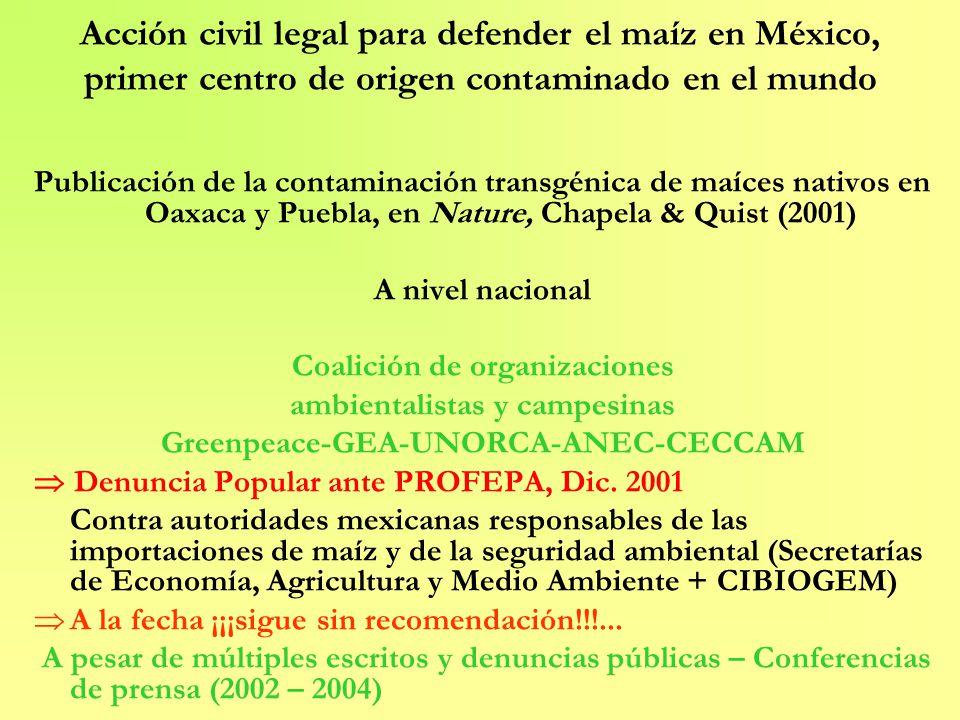 Acción civil legal para defender el maíz en México, primer centro de origen contaminado en el mundo