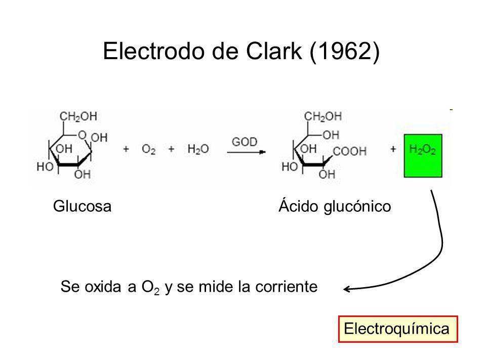 Electrodo de Clark (1962) Glucosa Ácido glucónico