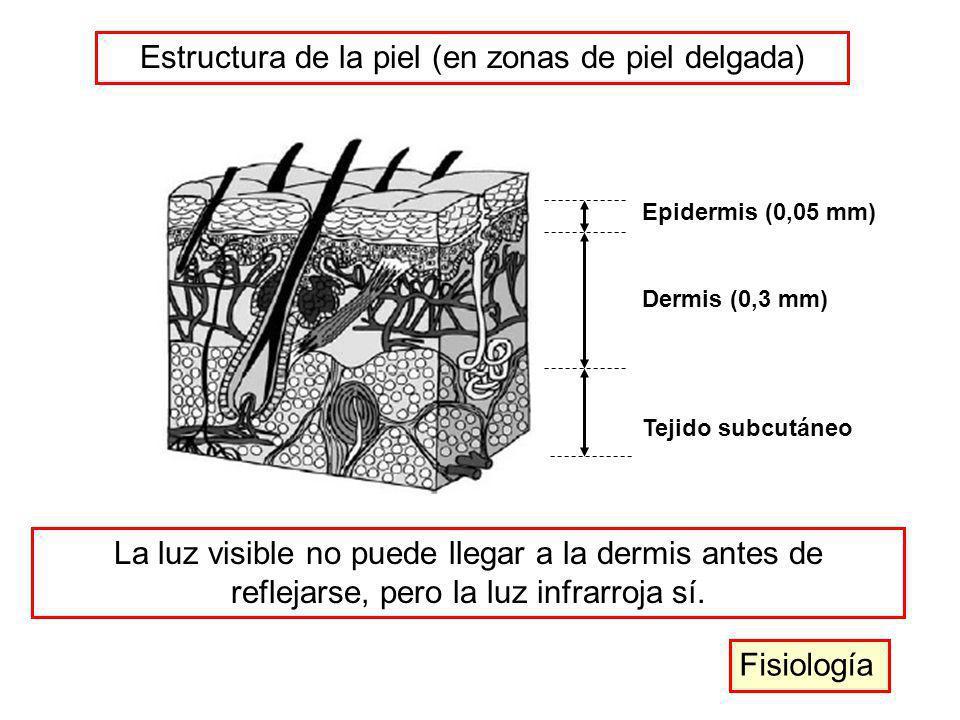 Estructura de la piel (en zonas de piel delgada)