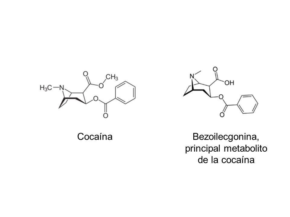 Bezoilecgonina, principal metabolito de la cocaína