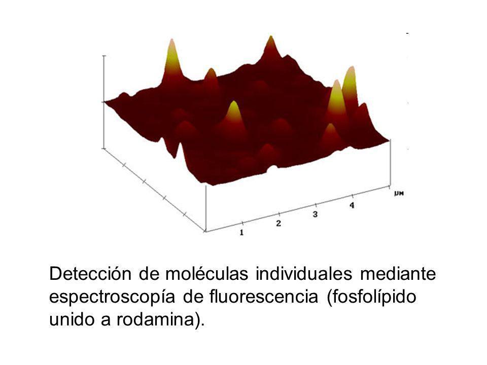 Detección de moléculas individuales mediante espectroscopía de fluorescencia (fosfolípido unido a rodamina).