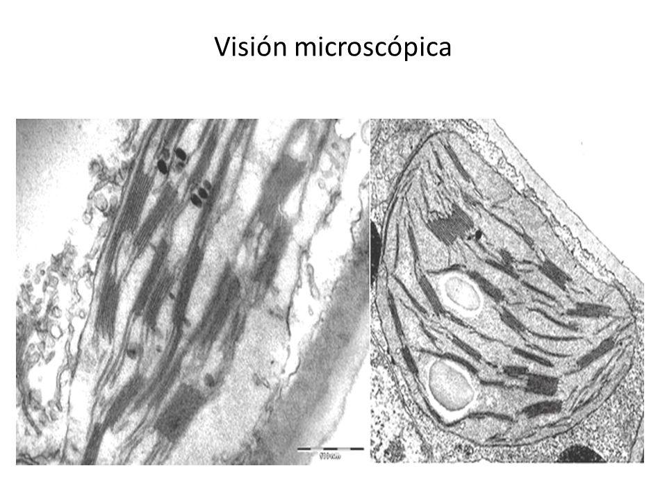 Visión microscópica