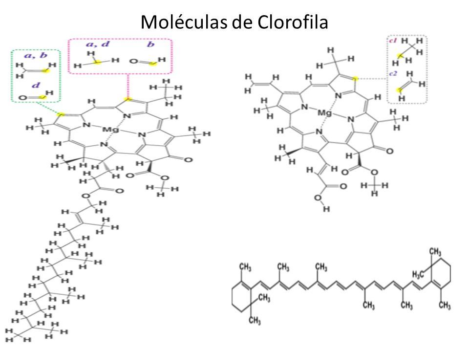 Moléculas de Clorofila