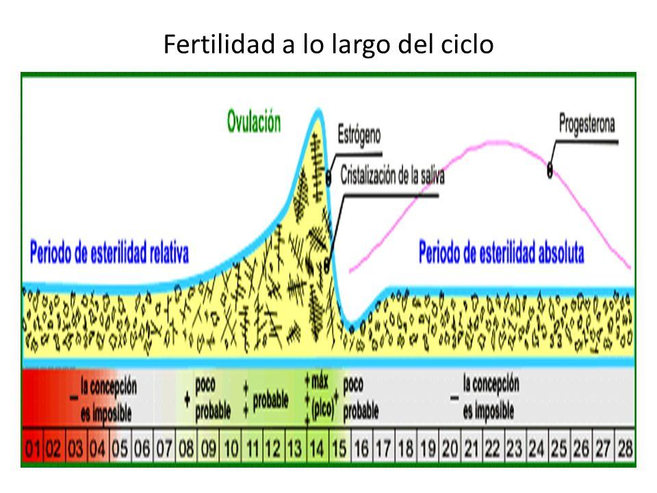 Fertilidad a lo largo del ciclo