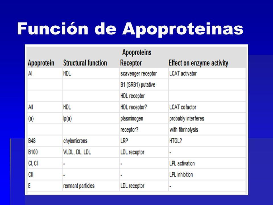 Función de Apoproteinas