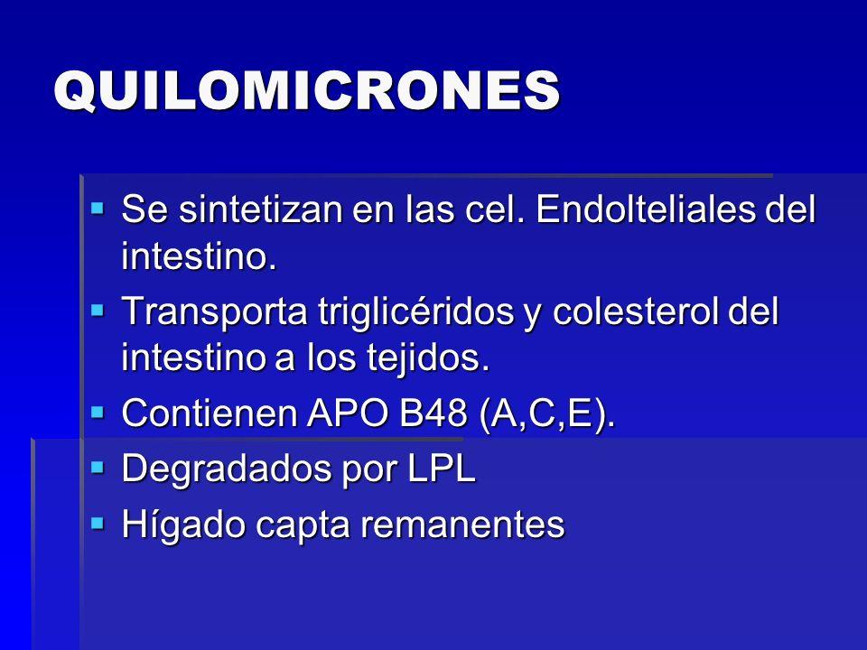 QUILOMICRONES Se sintetizan en las cel. Endolteliales del intestino.