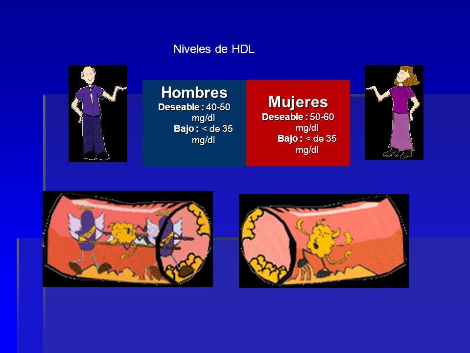 Hombres Mujeres Niveles de HDL