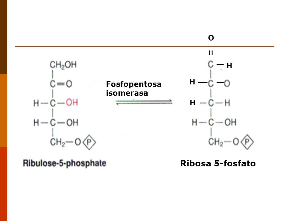 H H -- O Ribosa 5-fosfato Fosfopentosa isomerasa