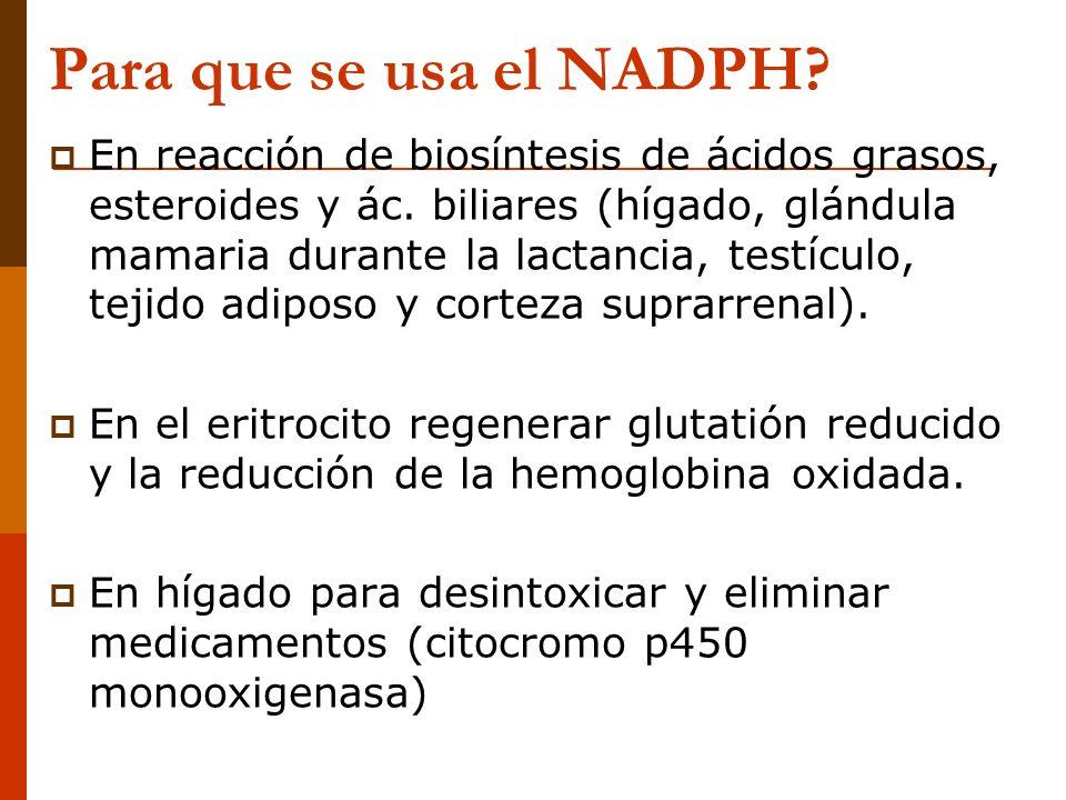 Para que se usa el NADPH
