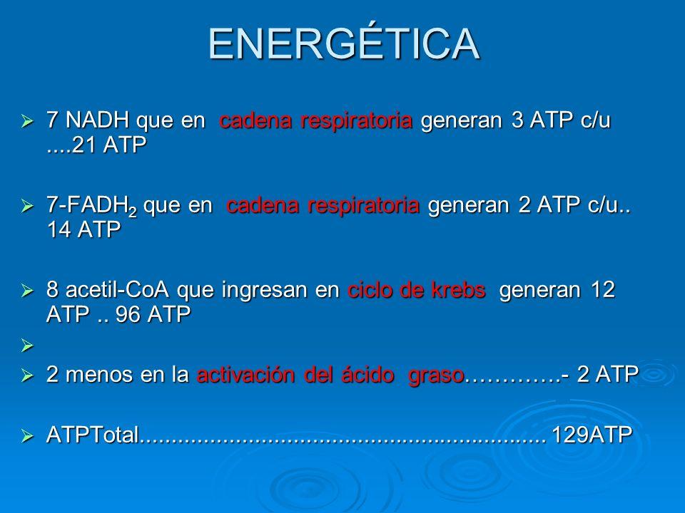 ENERGÉTICA 7 NADH que en cadena respiratoria generan 3 ATP c/u ....21 ATP. 7-FADH2 que en cadena respiratoria generan 2 ATP c/u.. 14 ATP.