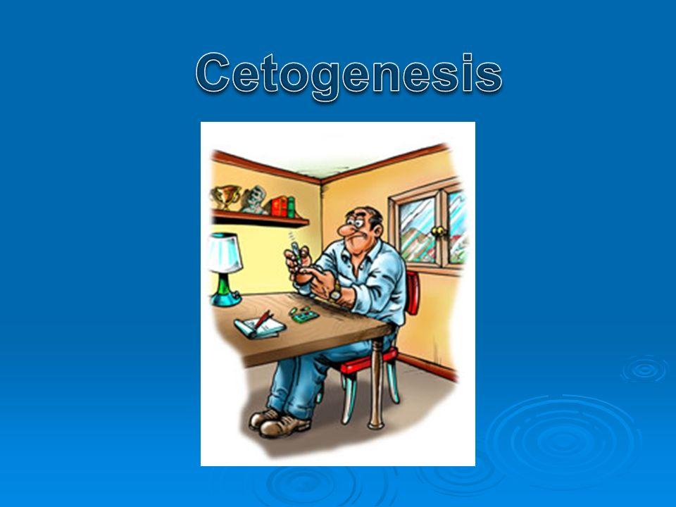 Cetogenesis