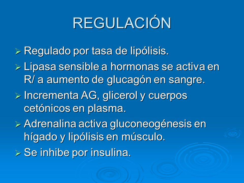 REGULACIÓN Regulado por tasa de lipólisis.