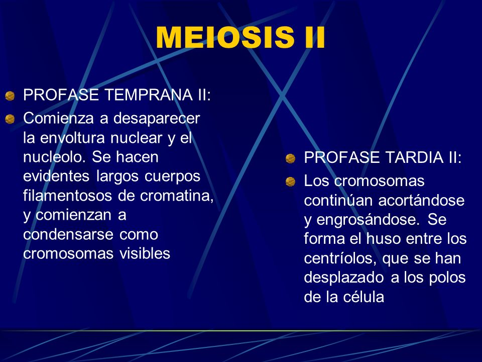 MEIOSIS II PROFASE TEMPRANA II: