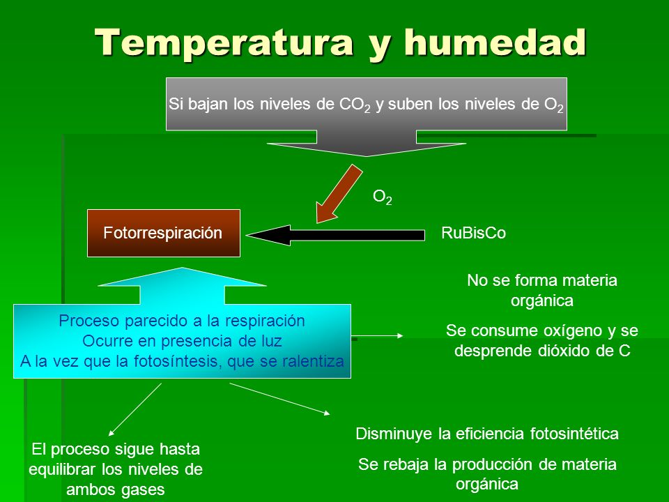 Temperatura y humedad Si bajan los niveles de CO2 y suben los niveles de O2. O2. Fotorrespiración.