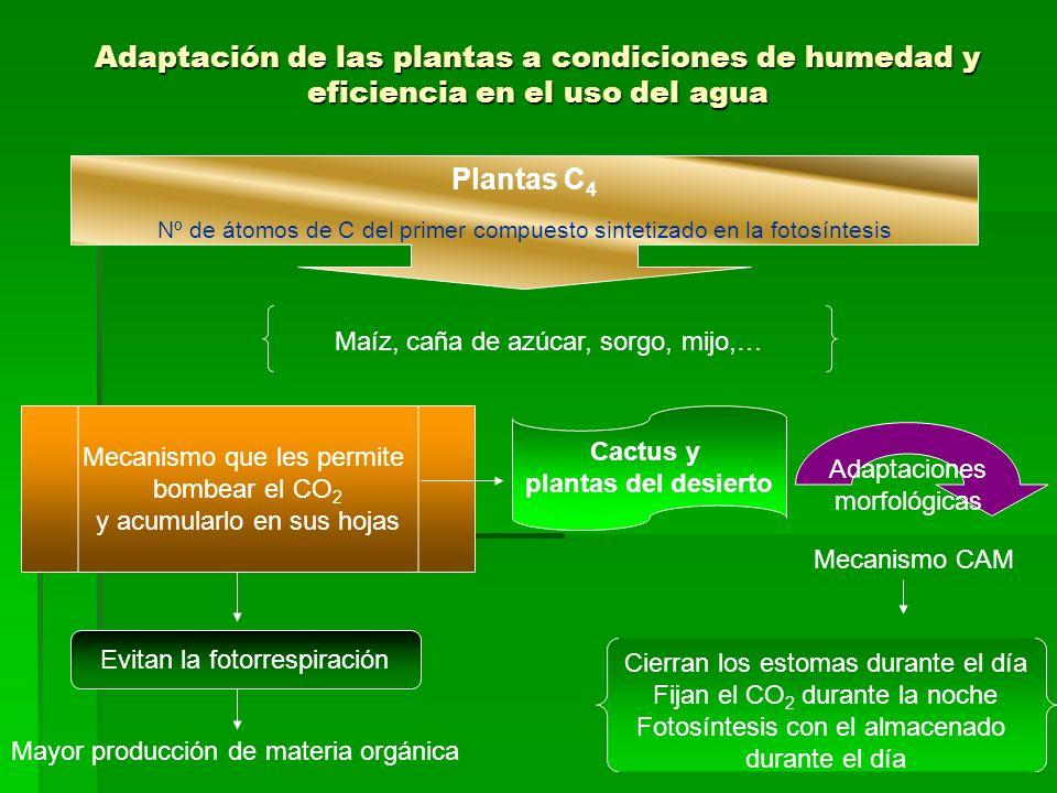 Nº de átomos de C del primer compuesto sintetizado en la fotosíntesis