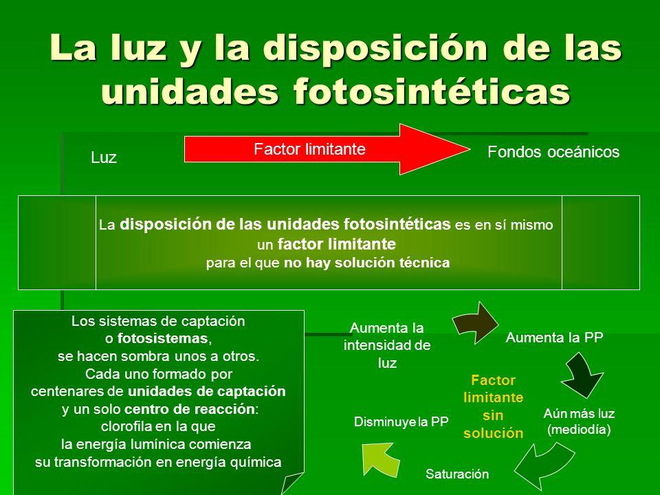 La luz y la disposición de las unidades fotosintéticas