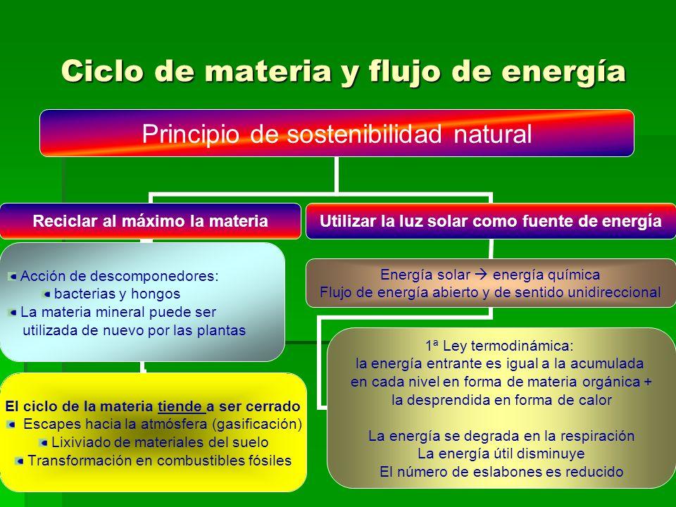 Ciclo de materia y flujo de energía