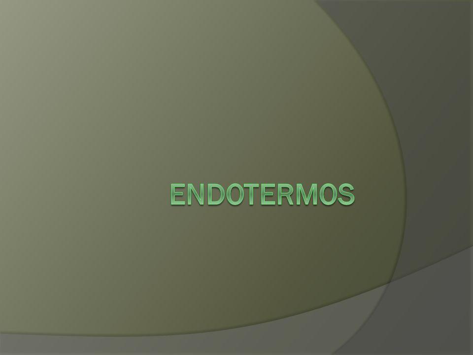 ENDOTERMOS