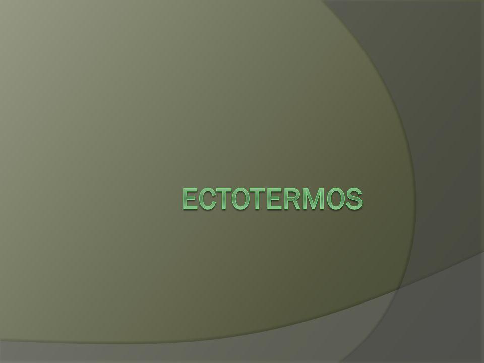 ECTOTERMOS