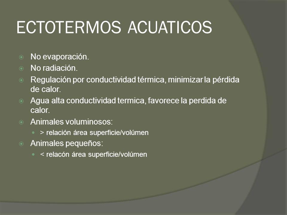 ECTOTERMOS ACUATICOS No evaporación. No radiación.