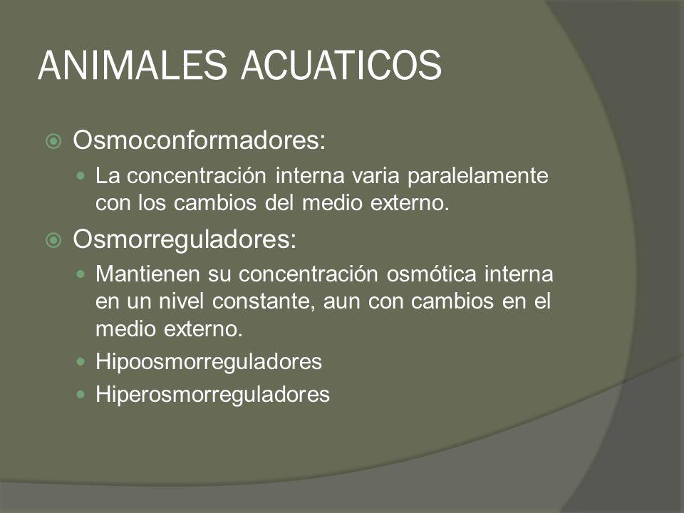 ANIMALES ACUATICOS Osmoconformadores: Osmorreguladores: