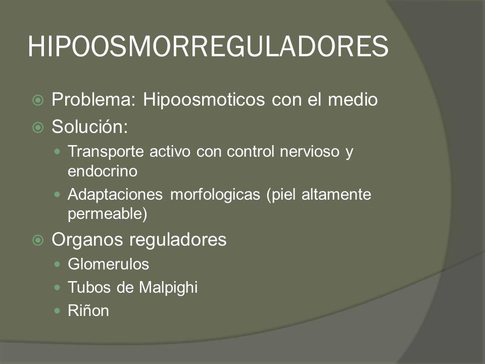 HIPOOSMORREGULADORES