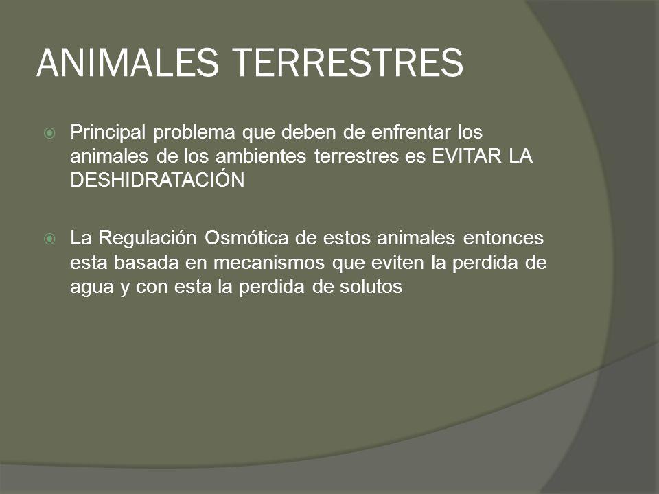 ANIMALES TERRESTRES Principal problema que deben de enfrentar los animales de los ambientes terrestres es EVITAR LA DESHIDRATACIÓN.